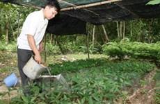 Nhân giống 5 loài cây quý tại Phong Nha-Kẻ Bàng