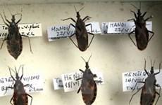 Không nên hoang mang khi phát hiện bọ xít hút máu