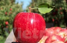 Australia thua New Zealand vụ kiện táo nhập khẩu