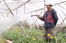 Người trồng hoa tại Hà Nội đang hối hả vào vụ mới