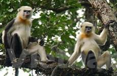 Một số giải pháp để bảo tồn động vật nguy cấp