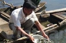 Nam Định thả về tự nhiên 2 triệu cá giống các loại