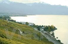 Lavaux - Chốn thiên đường của rượu nho Thụy Sĩ