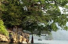Việt Nam hướng tới phát triển nền kinh tế xanh