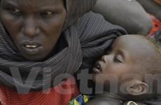 Khẩn cấp cứu hàng triệu dân ở vùng Sừng châu Phi