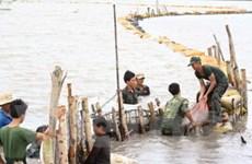 Nước lũ lên cao đe dọa vùng Tứ giác Long Xuyên