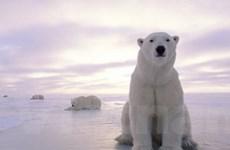 Băng ở Bắc Cực tan chảy nhanh chưa từng thấy