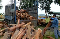 Truy đuổi 100km bắt giữ một xe ôtô chở gỗ lậu