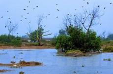 Nam Định triển khai dự án bảo tồn đất ngập nước
