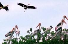 Chim quý hiếm đang xuất hiện nhiều tại Hòn Đất