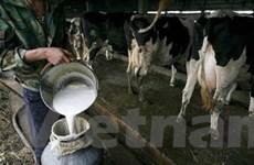 Trung Quốc sẽ không đáp ứng đủ nhu cầu về sữa