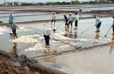 Diêm dân Bạc Liêu thất thu do thời tiết và chi phí