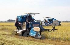 Nhu cầu dùng máy gặt đập liên hợp ngày càng cao