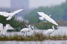 Bảo tồn thiên nhiên, văn hóa để phát triển ĐBSCL
