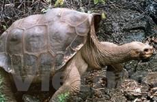 Ecuador ghi tên cụ rùa vào di sản văn hóa quốc gia