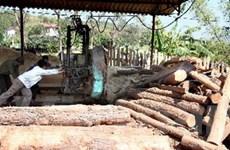 Nhà máy gỗ MDF lớn nhất châu Á đi vào hoạt động