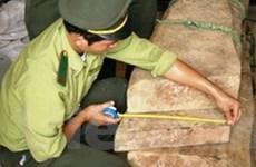 Vụ gỗ sưa Quảng Bình: Viện kiểm sát có để lọt tội?