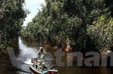 Lâm sản ngoài gỗ làm tăng giá trị kinh tế của rừng