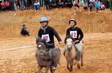 Độc đáo cuộc đua ngựa thồ trên Cao nguyên đá