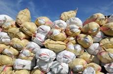 Philippines phát hiện bao đựng gạo có lượng chì cao