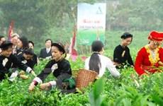 Festival Trà quốc tế lần hai tổ chức tại Thái Nguyên