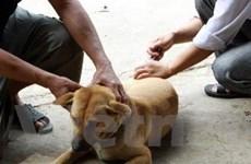 Yên Bái: Bùng phát bệnh dại tại huyện Văn Chấn
