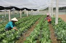 Rau quả Việt Nam: Liên kết tạo hướng đi bền vững