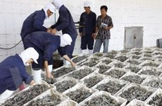 Cần cấp bách giữ ổn định thị trường tôm nguyên liệu