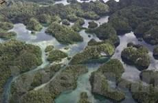 Indonesia: 4 bước phát triển thân thiện với môi trường
