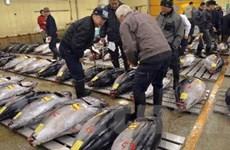 Nhật đề nghị WTO can thiệp về lệnh cấm nhập khẩu cá