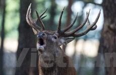 Giải mã bí mật có thể thuần hóa động vật hoang dã