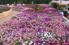 Sáu thảm hoa khổng lồ tại Festival hoa Đà Lạt