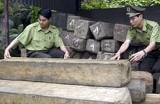 Quảng Nam: Kiểm lâm nổ súng bắt xe chở gỗ lậu