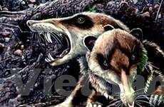 Phát hiện hóa thạch loài sóc có răng kiếm cổ đại