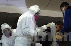 Virus A/H1N1 lây từ người sang lợn ở Argentina