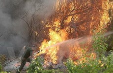 Châu Âu mất hàng trăm triệu USD do cháy rừng