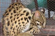 Phát hiện số lượng lớn động vật rừng quý hiếm