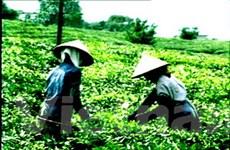 Việt Nam kêu gọi đầu tư mạnh vào ngành chè