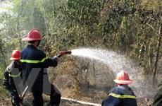 Kịp thời dập tắt một đám cháy rừng ở Lào Cai