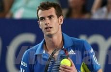 Andy Murray quyết định không tham dự Davis Cup