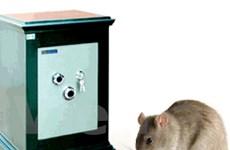 Ngân hàng náo loạn vì... một con chuột
