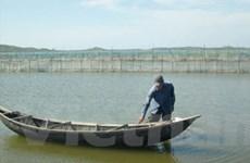 Mùa khai thác hàu trên thắng cảnh đầm Ô Loan