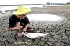Hạn hán lan rộng đang tác động mạnh ở Thái Lan