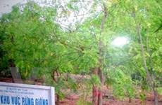 Nhân giống cây Neem bằng nuôi cấy mô thực vật