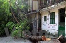 Hà Nội: Bắt giữ bốn đối tượng cưa trộm cây gỗ sưa