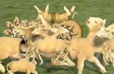 """Video chú cừu """"biến hình"""" gây sốt trên YouTube"""