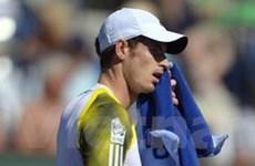 Indian Wells Masters: Murray, Djokovic nhọc nhằn