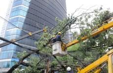 TP. Hồ Chí Minh: Mưa lớn làm cây đổ, đường ngập