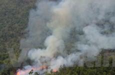Xây dựng chính sách nhằm quản lý rừng đặc dụng