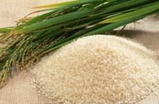 Gạo Philippines cần kiểm tra hàm lượng kim loại nặng